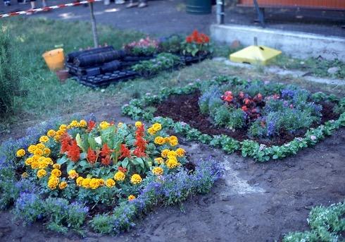 Con poche specie e un disegno semplicissimo si colora il giardino della scuola