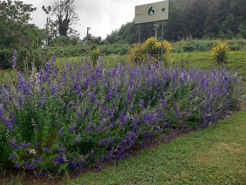 Il Giardino delle Erbe si trova a Casola Valsenio (Ra)
