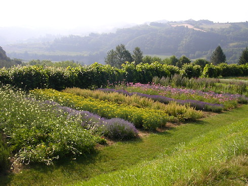 Panoramica di piante officinali ed aromatiche a giugno - Il Giardino delle Erbe