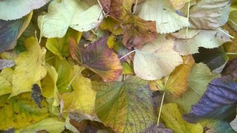 Nelle cellule delle foglie si trovano sostanze pigmentate solitamente invisibili