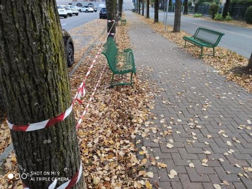 La raccolta delle foglie è una delle tematiche più 'insidiose' del lavoro del manutentore del verde