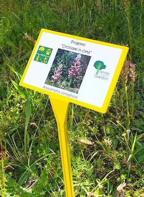 Orchidee in città: accanto alle fioriture sono stati posizionati i cartelli informativi