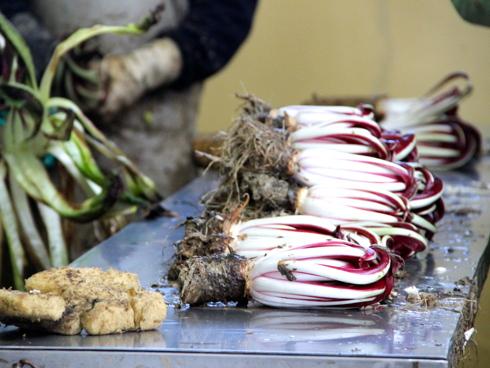 Radicchio rosso di Treviso Igp pulito e pronto alla vendita