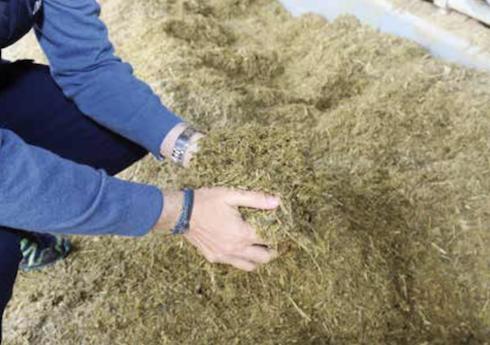 I lattobacilli sono essenziali per arrivare in mangiatoia con un trinciato ricco di sostanze nutritive per la bovina