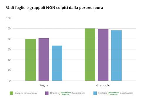 Foglie e grappoli non colpiti dalla peronospora