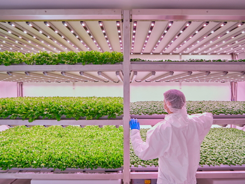 Vertical farmings, orticoltura urbana