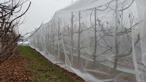 Prova portinnesti/forme di allevamento, Azienda agraria Università di Bologna