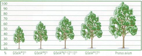 Grafico altezze GiSeLa®
