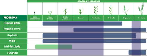 Posizionamento tecnico di Netor su cereali, in funzione della patologia da controllare