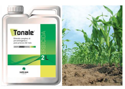Tonale di Sipcam Italia è la soluzione di pre-emergenza e di post-precoce per i diserbi del mais