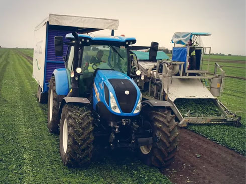 New Holland T6 - raccolta spinaci Baby Leaf