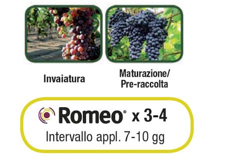 Calendario applicazioni Romeo