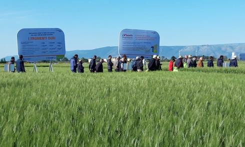I campi dimostrativi sono momento di condivisione di informazioni preziose sulle varietà, sui mezzi di difesa e nutrizione, come pure sulle tecniche agronomiche più moderne e produttive