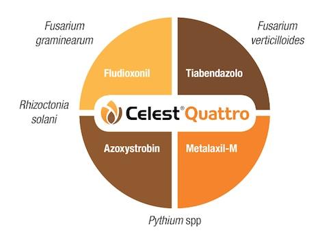 Celest® Quattro è il conciante a quattro vie contro gli agenti del marciume che albergano nel terreno