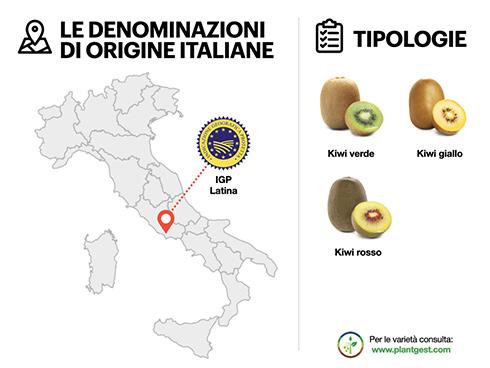 La scheda prodotto del kiwi per la rubrica Ciboteca italiana