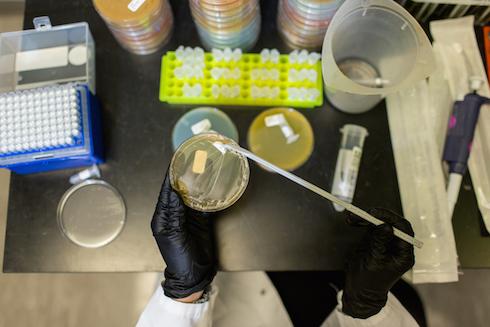 I ricercatori di Pivot bio hanno selezionato i microrganismi utili che vivono in simbiosi con le piante
