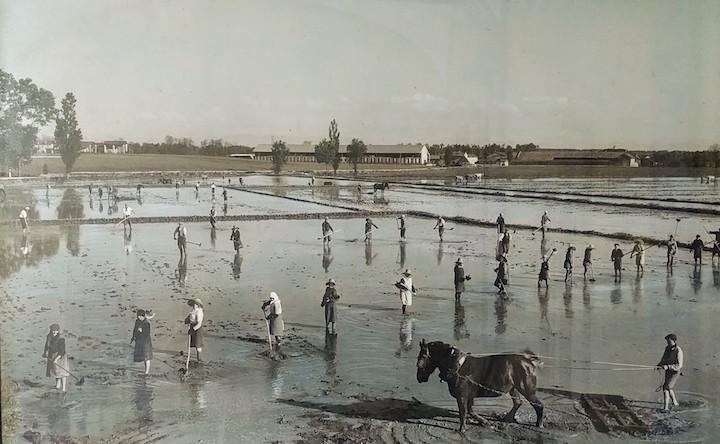 L'azienda agricola Cascinazza agli inizi del secolo scorso