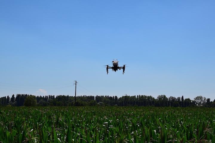 Un drone in volo su un campo di mais