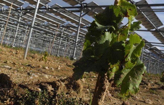 Vigna fotovoltaica
