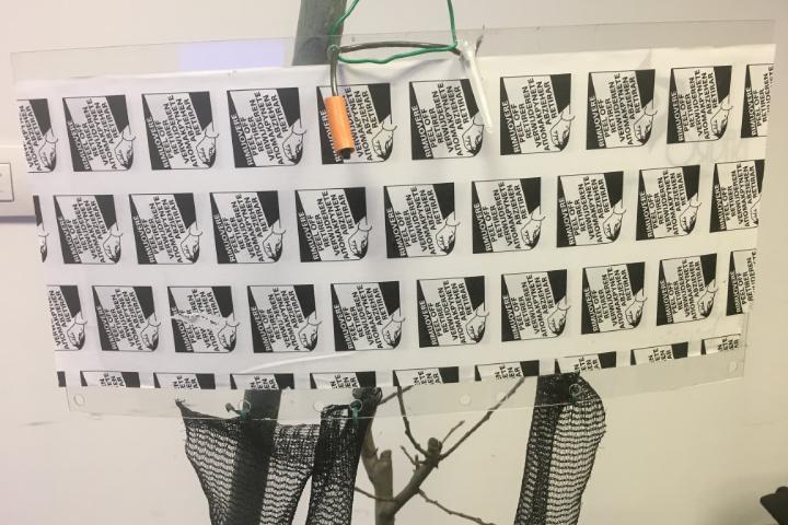 La trappola di monitoraggio di Isagro per la cimice asiatica, dotata di due diffusori