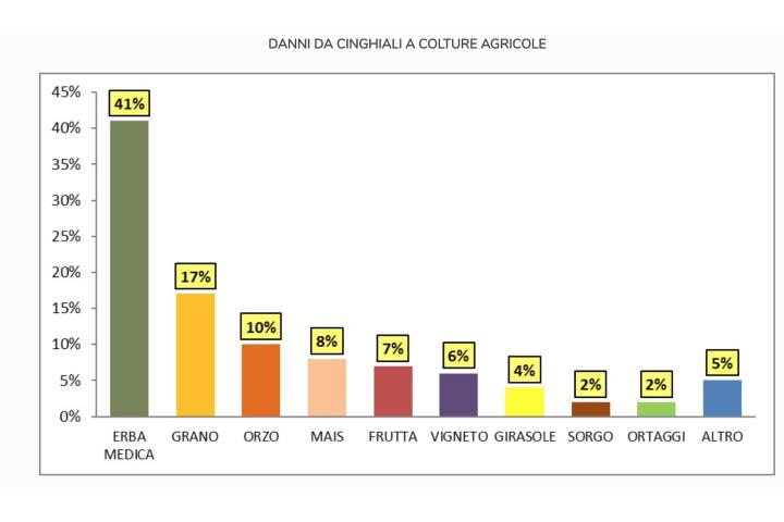 Grafico sui danni causa dai cinghiali alle colture agricole