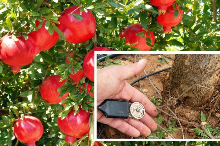 Il sensore applicato al suolo nella Masseria Fruttirossi