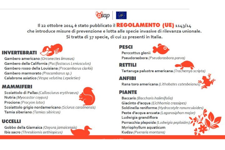 Schema del Regolamento Ue