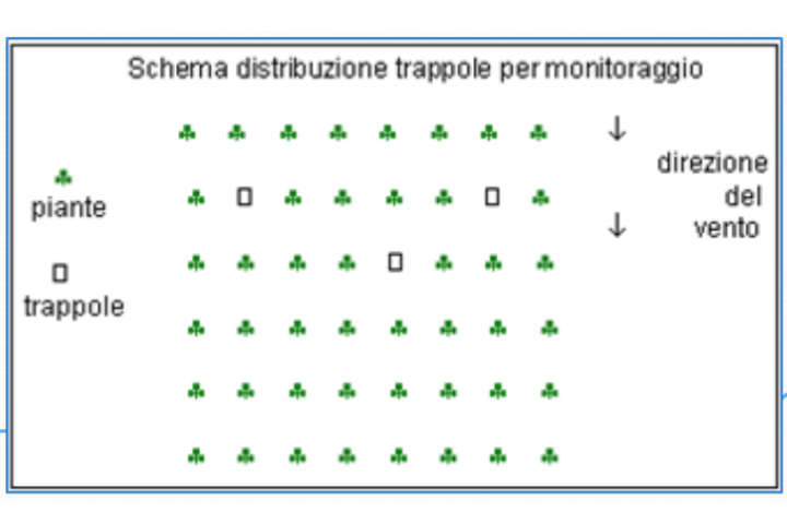 Schema distribuzione trappole per monitoraggio