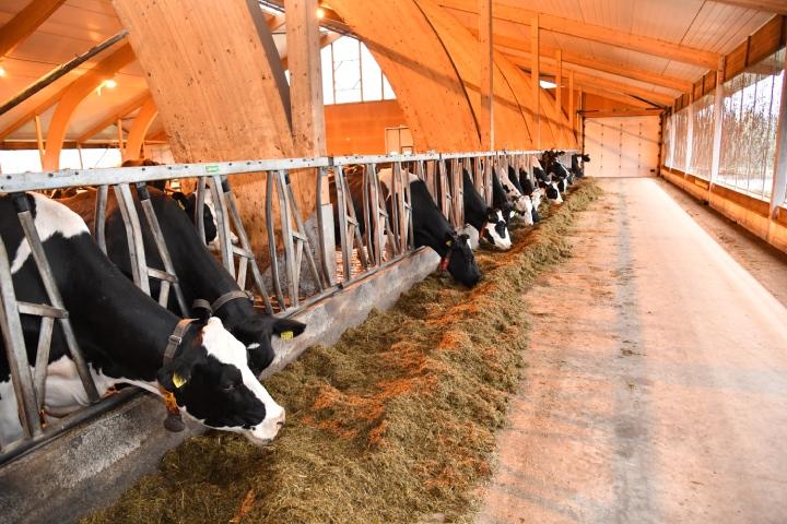 Le stalle non sono riscaldate e durante l'inverno ci sono solo un paio di gradi sopra lo zero