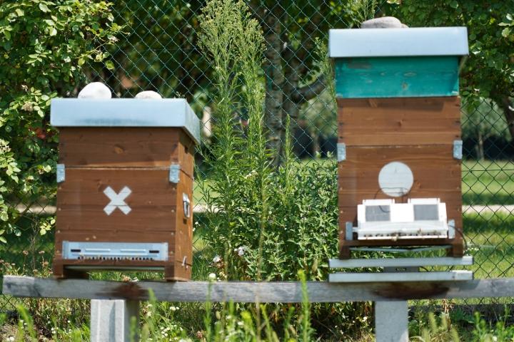 Presso l'Agricola Moranda sono presenti diverse arnie di api