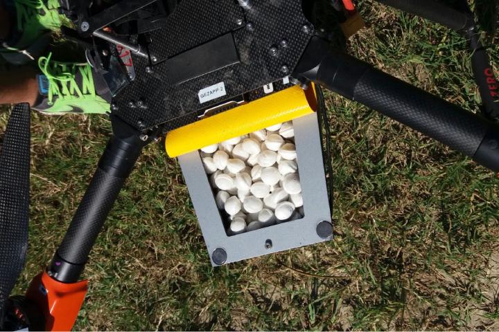 Il drone è stato impiegato per il lancio del parassitoide della piralide del mais