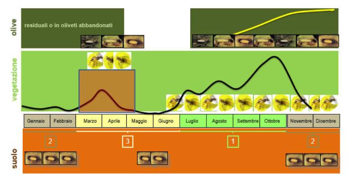 Nota tecnica 'Indicazioni di massima per il controllo della mosca delle olive, Bactrocera oleae nel rispetto della normativa vigente e nell'ottica di una difesa sostenibile dell'oliveto in Toscana'