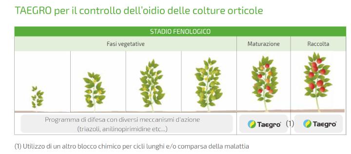 Taegro per il controllo dell'oidio delle colture orticole