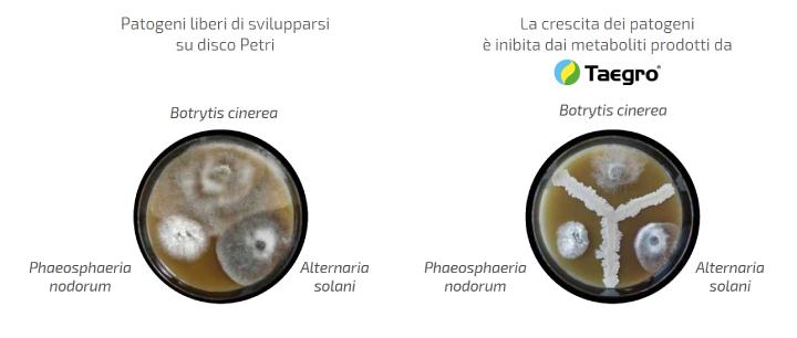 Confronto patogeni