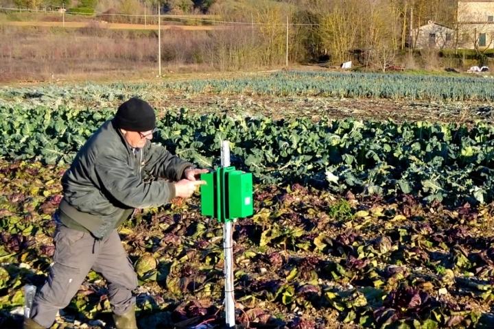 L'installazione degli emettitori in un campo di orticole