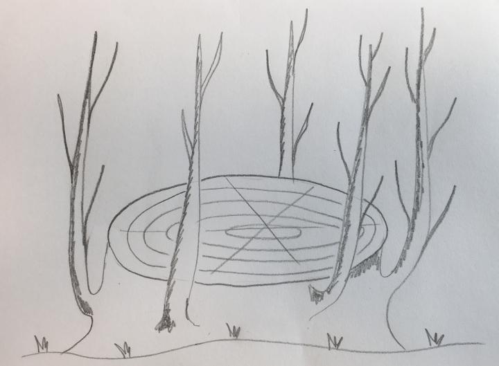 Schema di sviluppo di una ceppaia dopo la succisione di un tronco di olivo