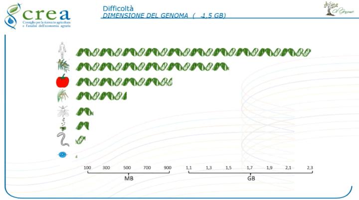 Dimensione del genoma