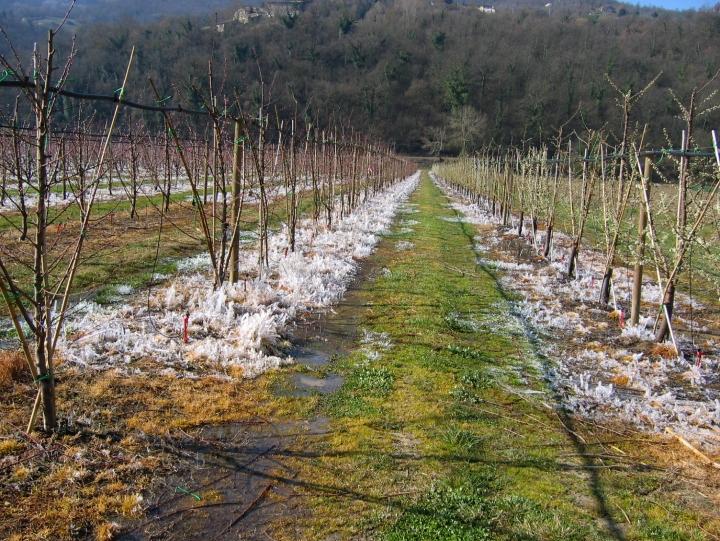 Un esempio di irrigazione antibrina sottochioma