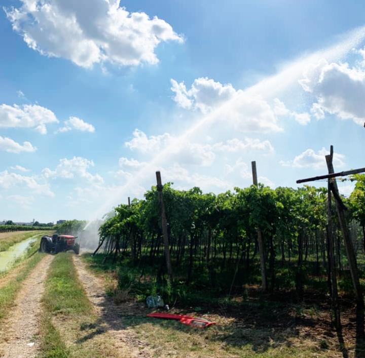 L'irrigazione può anche essere effettuata senza rotolone