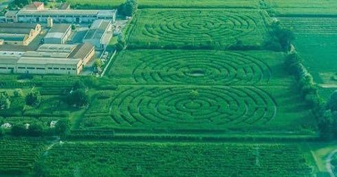 Un labirinto di mais