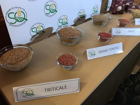 Cereali - Seme di qualità