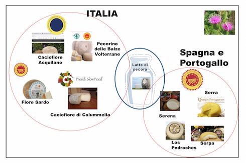 Le più diffuse tipologie di formaggio prodotte con coagulanti vegetali