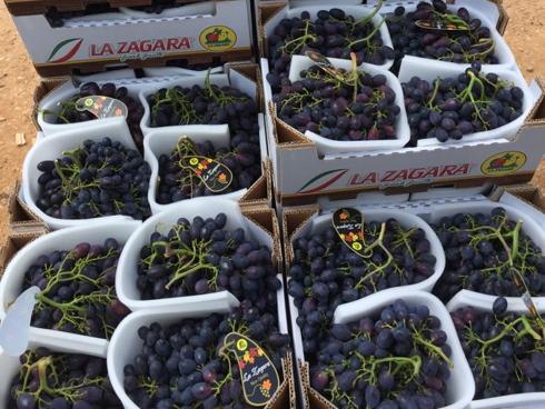 Black Magic, varietà di uva ta tavola a grappolo di colore nero e con semi