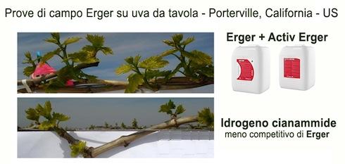 Prove di campo Erger su uva da tavola