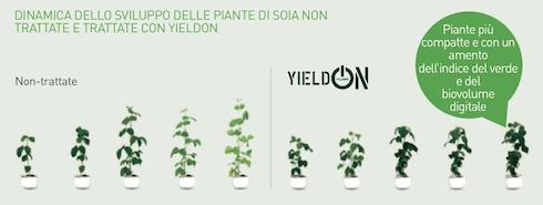 Dinamica di sviluppo delle piante di soia, le quali si mostrano più compatte, verdi e voluminose