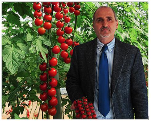 Valagro, pomodoro ciliegino Rosario Tomasi, resp. Vendite-Acquisti Azienda Cooperativa Vittoria Tomatoes