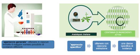 I metodi di estrazione selezionati da Valagro assicurano la massima qualità degli ingredienti attivi della LInea MC