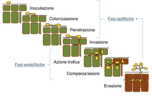 ciclo-invasione-fasi-schema-microbiologia-patologia-corso-ottobre-2021-vittoriana-lasorella-fonte-univerità-cattolica-sacro-cuore-piacenza-biosolution-academy.png