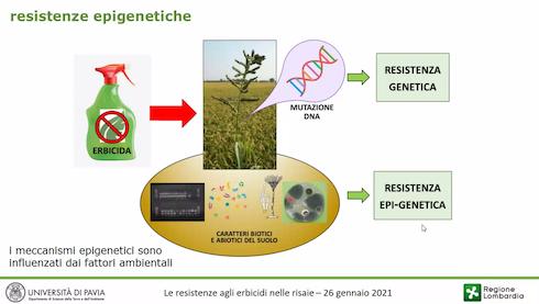 resistenze epigenetiche, inibizione o attivazione dell'espressione di un gene in risposta a fattori di stress