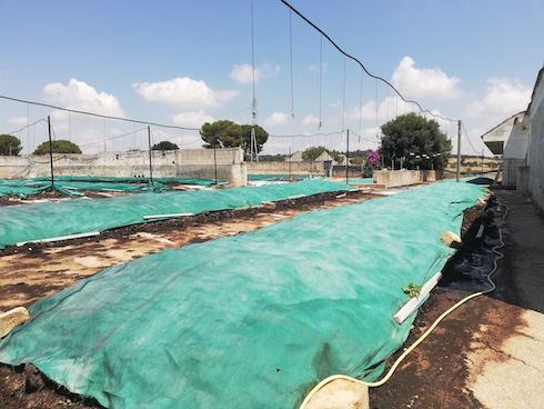 Lettiere di letame per l'allevamento di lombrichi